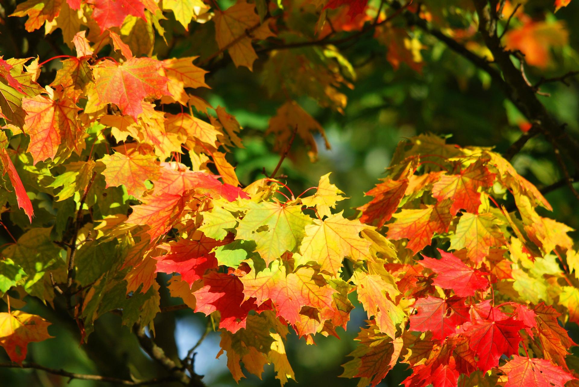 liście lecąz drzew