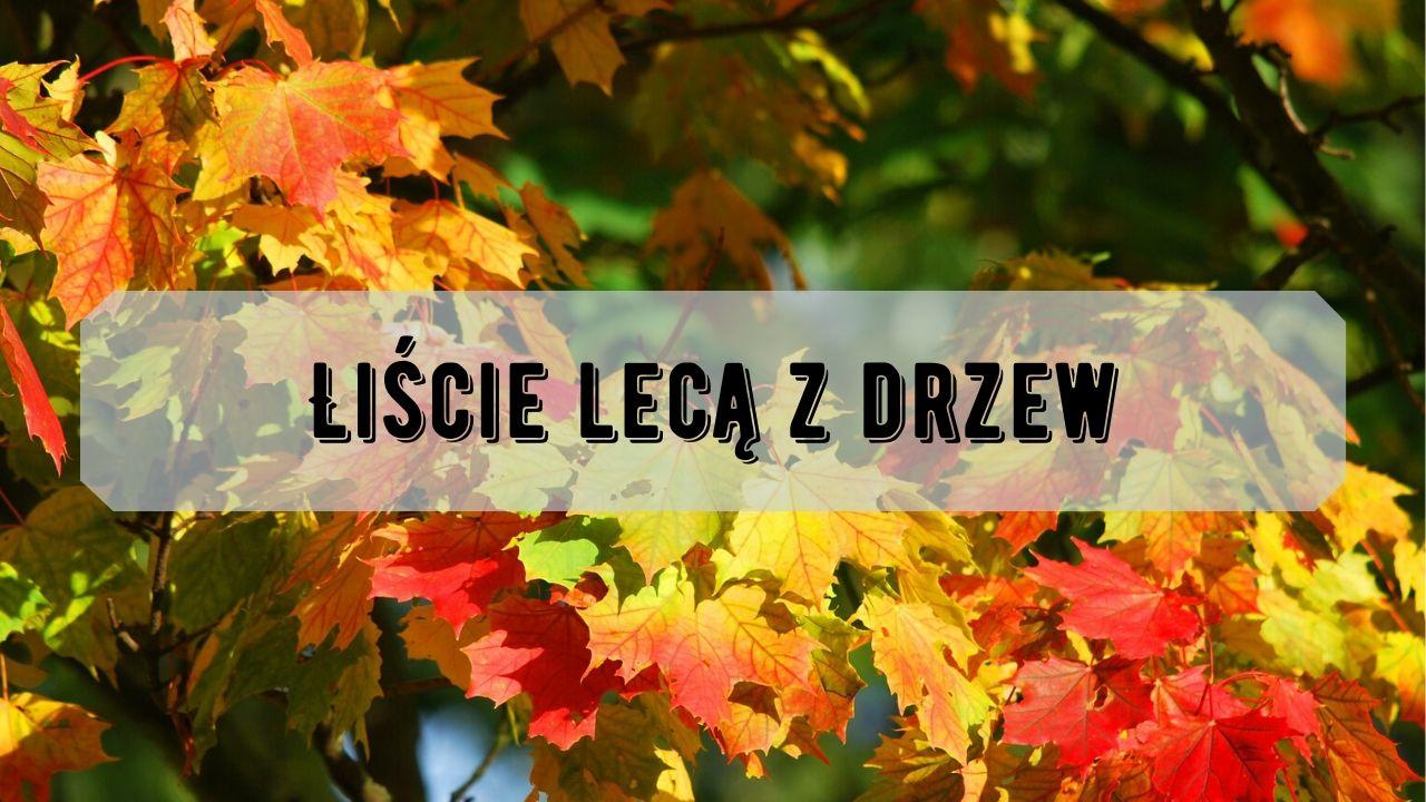 Liście lecą z drzew